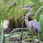 Southern Louisiana Party crawfish alligator Cajun Encounters Cajun Encounters Tour Company, New Orleans