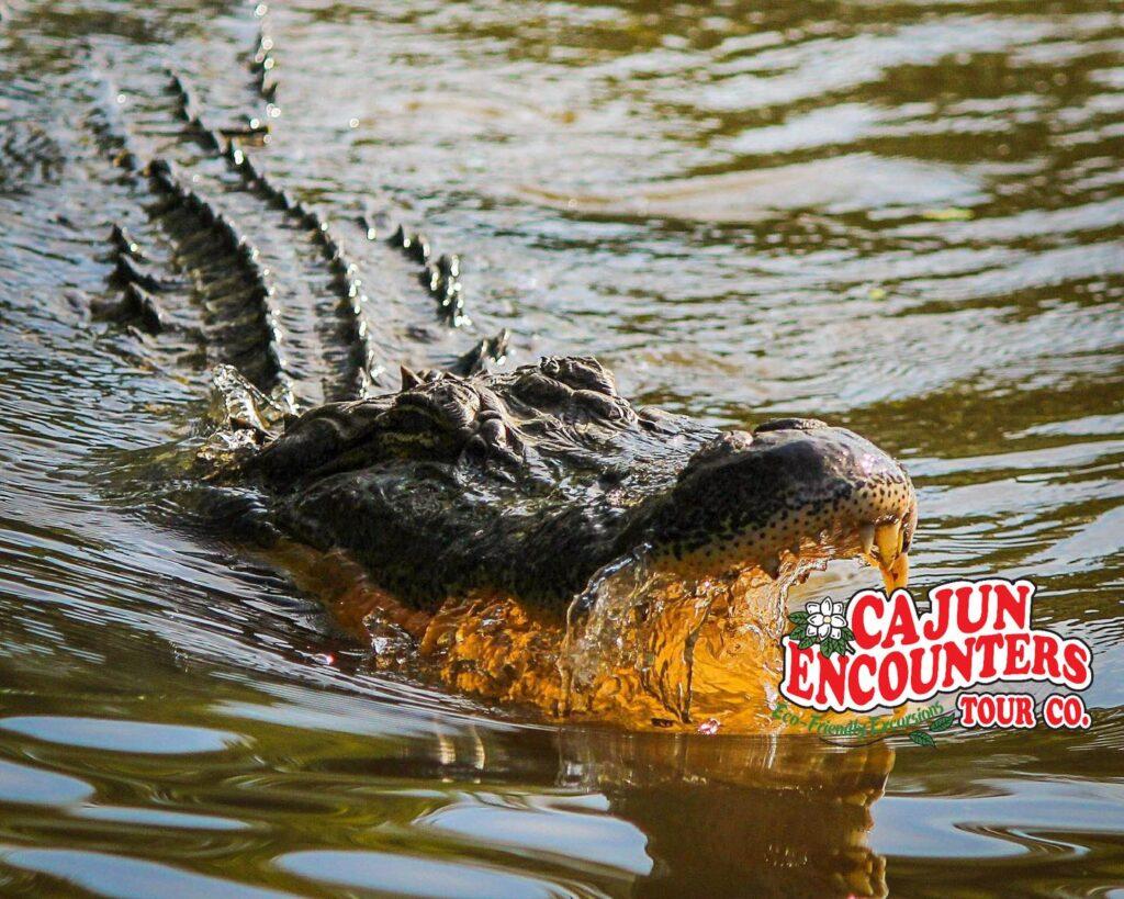 cajun encounters blog Cajun Encounters