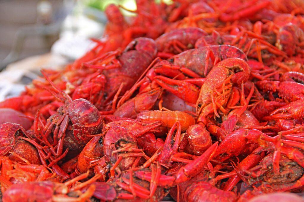 crawfish season Cajun Encounters