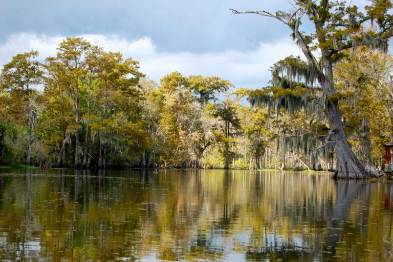 swamps bayous marshes different Cajun Encounters